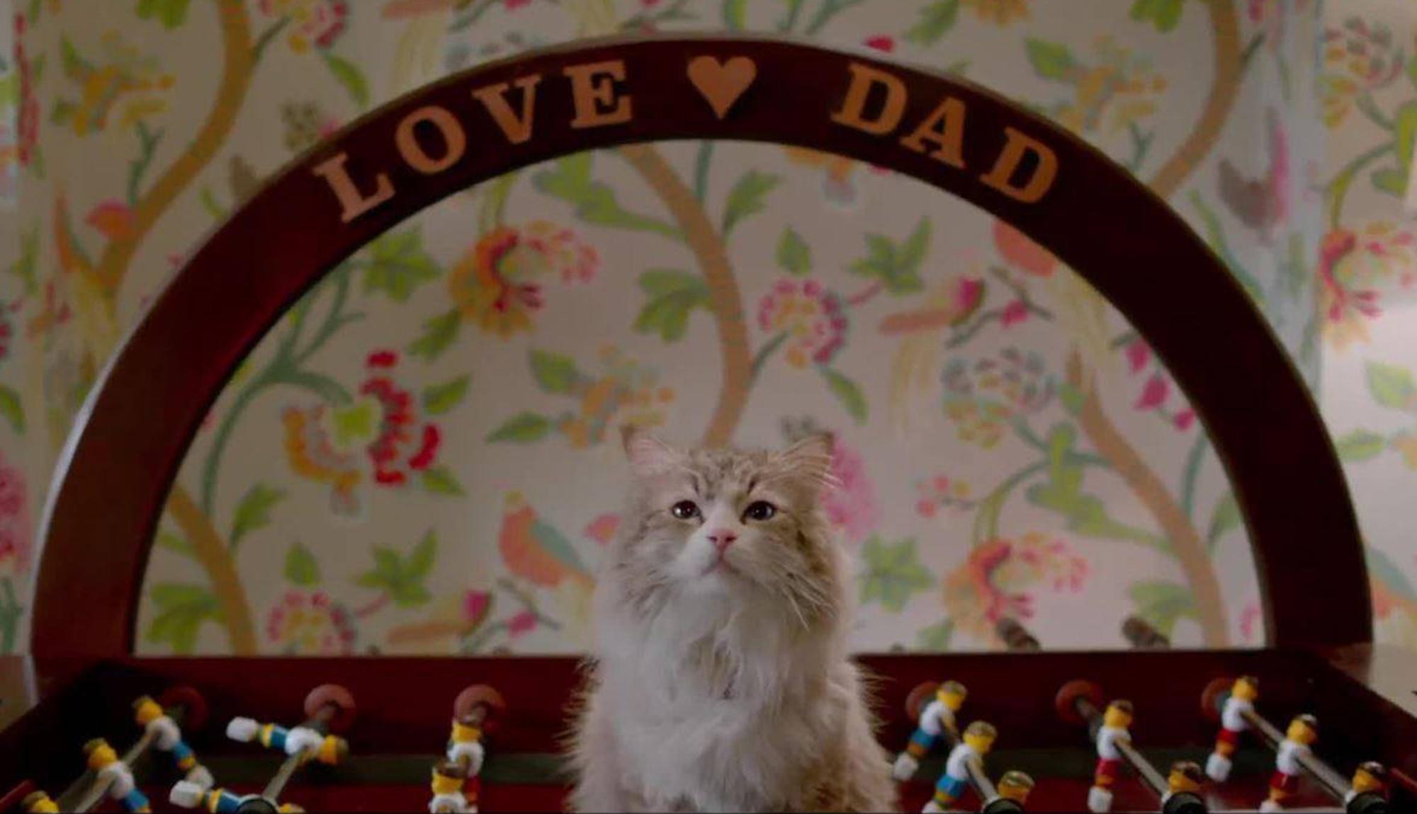 Una vita da gatto – Recensione