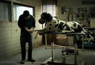 Dogman rappresenterà l'Italia agli Oscar